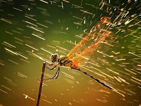 dragonfly-branch-rain__breathtaking-national-geographic-nature-wallpapers-hd